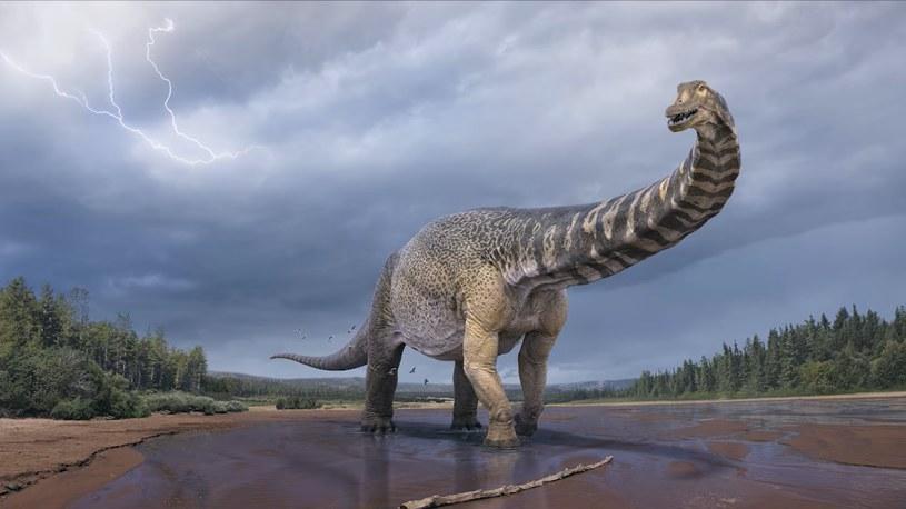 Komputerowa wizualizacja dinozaura Australotitan cooperensis. /Queensland Museum /Facebook