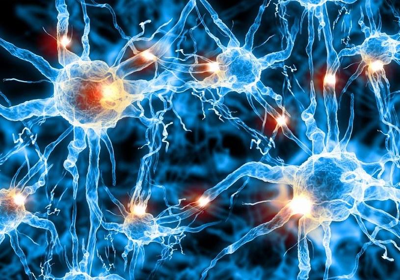 """Komputerowe sieci neuronowe są w stanie """"nauczyć się"""" jak modelować zachowanie mózgu /123RF/PICSEL"""
