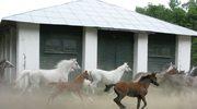 Koń... a sprawa polska