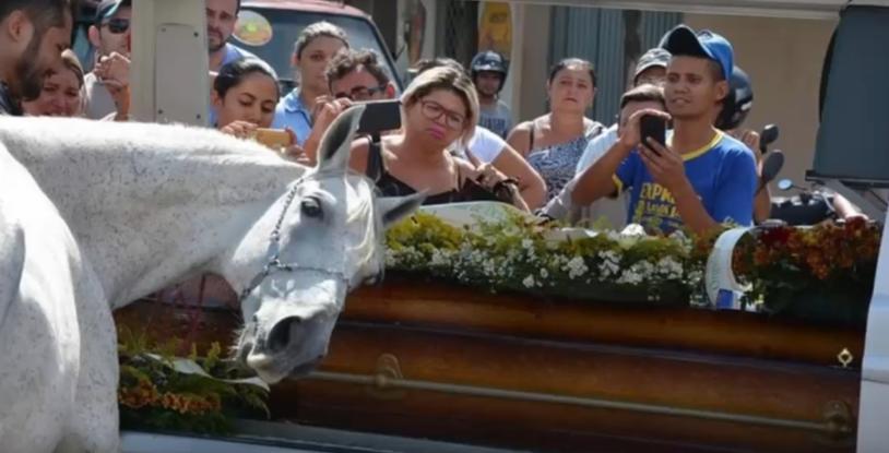 Koń bardzo przeżył pogrzeb swojego właściciela /Caters Clips /YouTube
