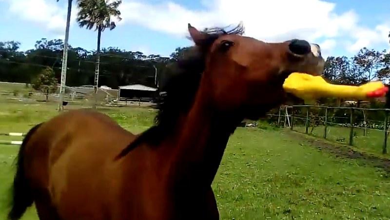 Koń by się uśmiał! /box of junk /YouTube