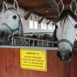 Koń, jaki jest, każdy widzi!