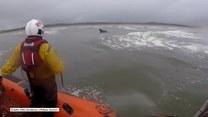 Koń wypłynął na otwarte morze. Uratowała go straż przybrzeżna