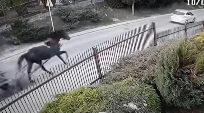 Koń z wozem galopem pokonał Zakopiankę /