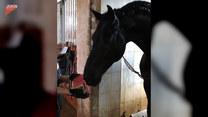 Koń zajada się ulubioną przekąską. Co to takiego?
