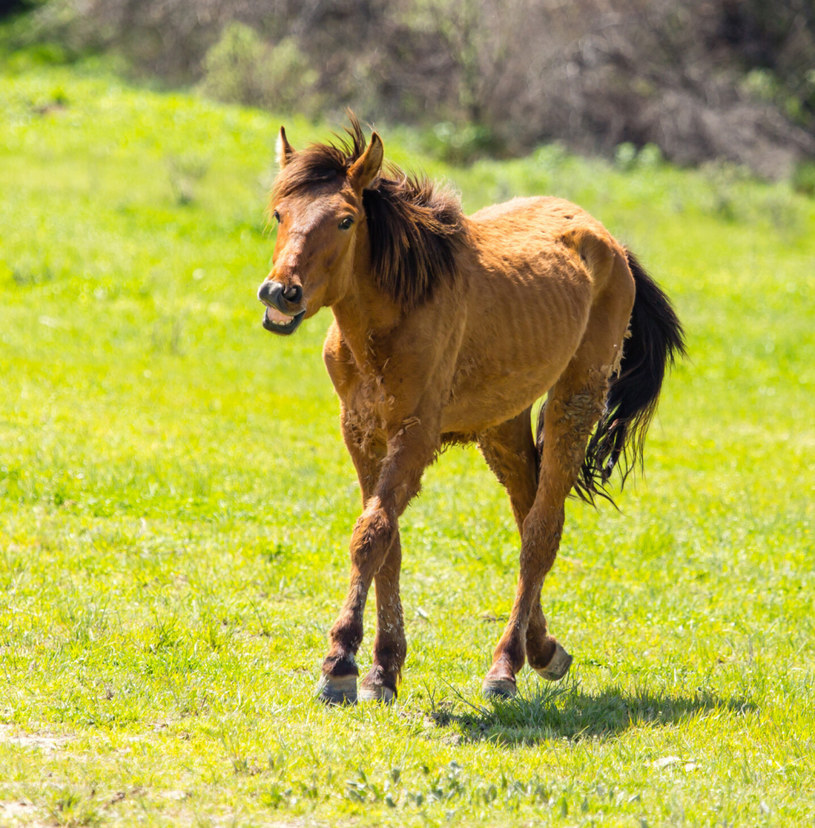 Koń; zdj. ilustracyjne /schankz/easyfotostock /East News