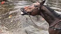 Koń zrobił głupią minę, a one ryknęły śmiechem. Hit