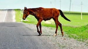 koń /Motor