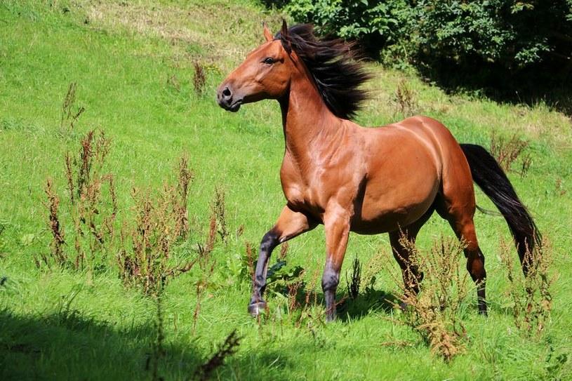 Koń /©123RF/PICSEL