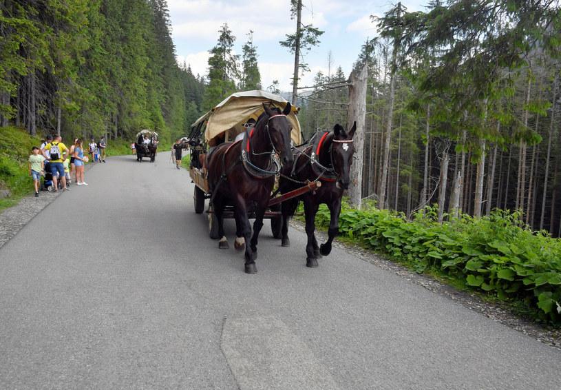 Konie ciągnące wozy do Morskiego Oka są już stałym elementem krajobrazu górskiego. Wiele osób wciąż korzysta z usług przewoźników /Paweł Murzyn  /East News