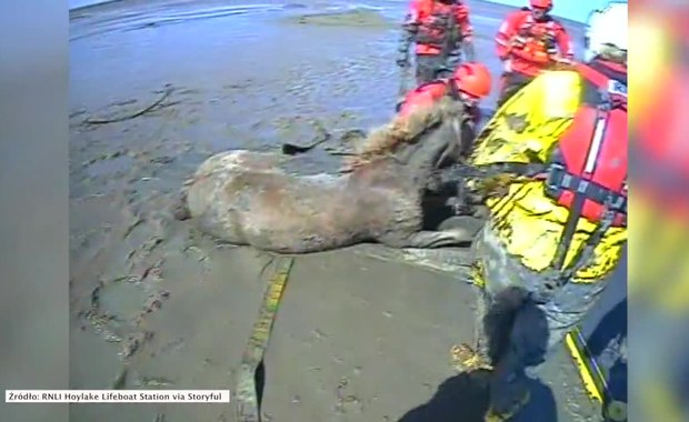 Konie utknęły w błocie. Uratowali je ratownicy
