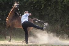 Konie za 1,4 mln euro. Aukcja w Janowie Podlaskim