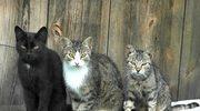 Koniec alergii na koty?