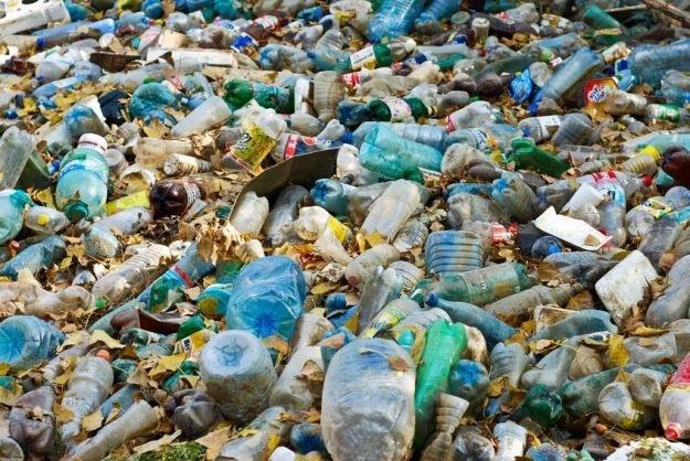 Koniec z długo rozkładającym się plastikiem. Bioplastik z krewetek uratuje przyrodę? /123RF/PICSEL