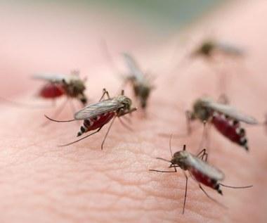 Koniec z malarią! Naukowcy wiedzą jak ocalić 600 tys. osób rocznie