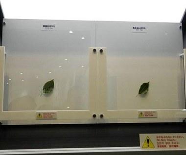 Koniec z refleksami świetlnymi na ekranach LCD