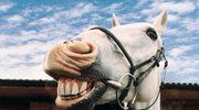 Końska kupa szczęścia. Dosłownie kupa...