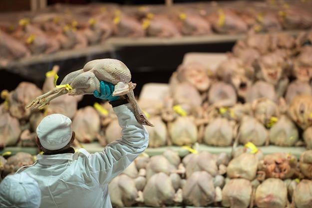 Konspol to największy przetwórca drobiu w Polsce /AFP
