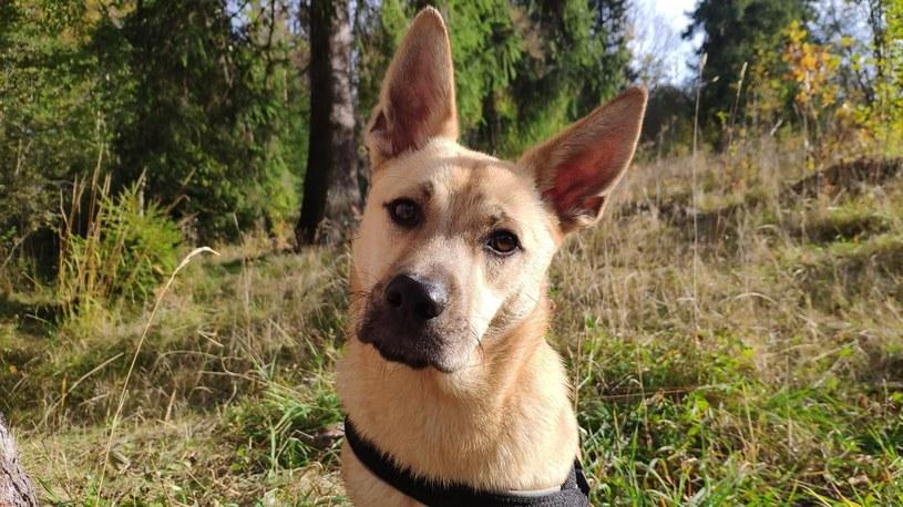 Kontakt w sprawie adopcji Amber - Fundacja Zwierzęta Podhala, tel. 698 921 128 /archiwum prywatne