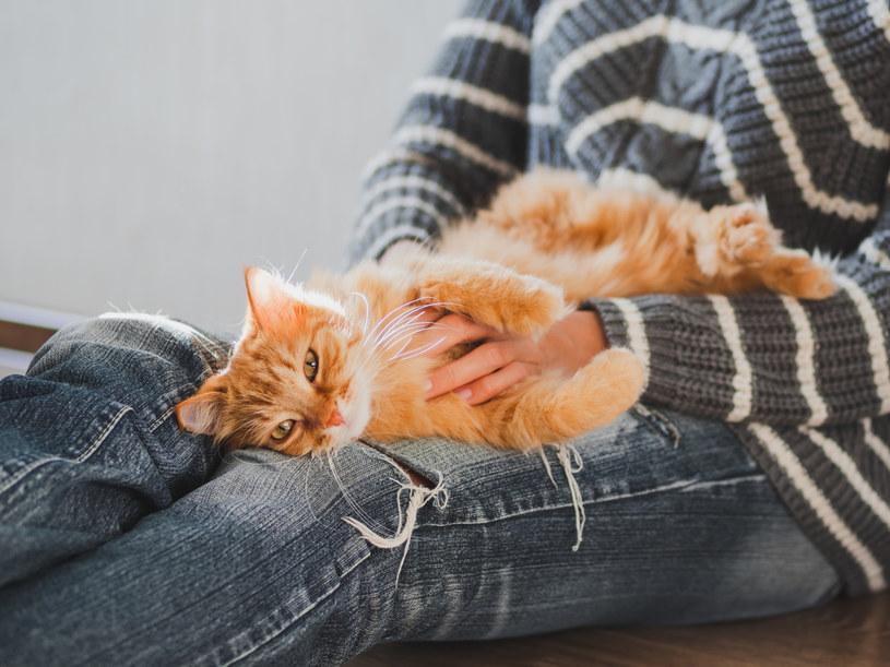Kontakt z kotem korzystnie wpływa na zdrowie: łagodzi stres, uspokaja, obniża ciśnienie /123RF/PICSEL