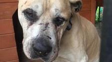 Kopał, dusił i gwałcił. 36-latek skazany za znęcania się nad psem