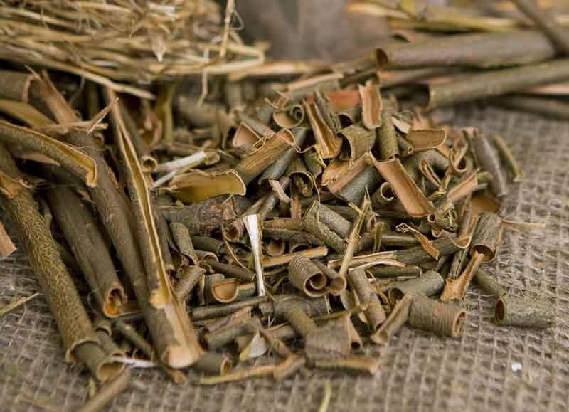 Kora wierzby Jest naturalnym źródłem salicylanów /123RF/PICSEL