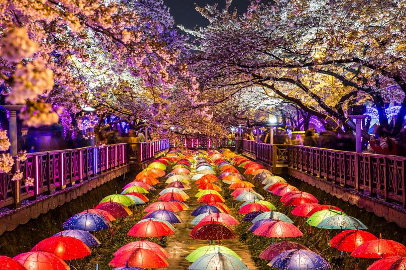 Korea Południowa to kraj łączący nowoczesność z tradycją /©123RF/PICSEL