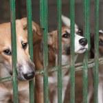 Korea Południowa: Tysiące działających ferm hodujących psy na mięso