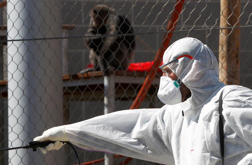 Koronawirus jest tylko jedną z wielu nadchodzących pandemii /OGNEN TEOFILOVSKI/ Reuters /Agencja FORUM
