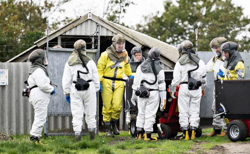 Koronawirus zmutował na fermach norek w Danii /HENNING BAGGER /PAP/EPA