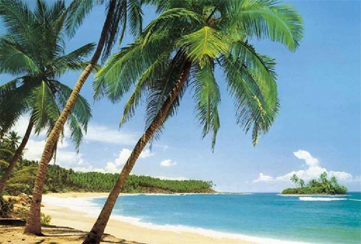 Korzenie drzewa kokosowego wykorzystanie /© Photogenica