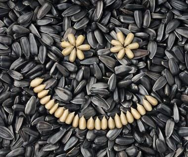 Korzyści płynące ze spożywania nasion słonecznika