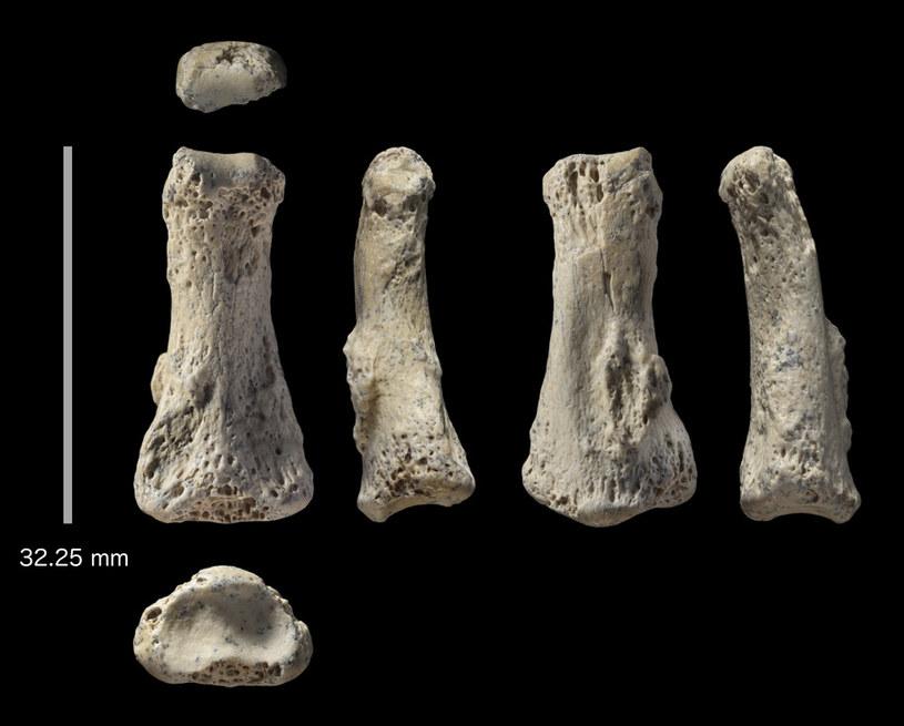 Kość palca stopy z Al Wusta w Arabii Saudyjskiej, sfotografowany z sześciu kierunków /materiały prasowe