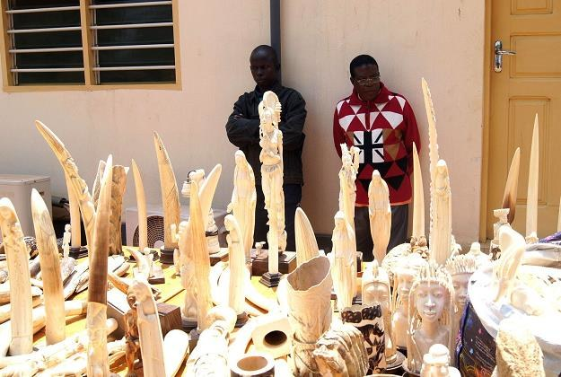 Kość słoniowa i z nosorożca poszukiwanym towarem /AFP