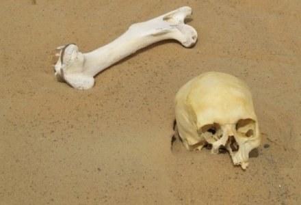 Kości w piaskach pustyni/fot. Mike-wise, CC /Kopalnia Wiedzy