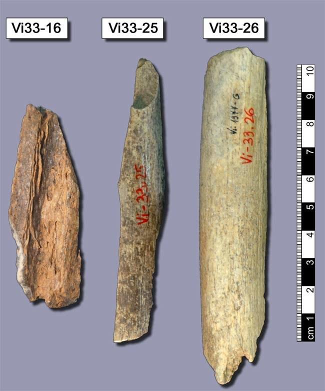 Kości z jaskini Vindija w Chorwacji, użyte do badań genomu  /Fot. Max-Planck-Institute EVA
