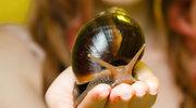 Kosmetyczne hity prosto od ślimaków i pszczół