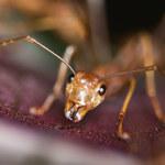Koszmar dziewczynki. Z jej oczu wychodzą mrówki