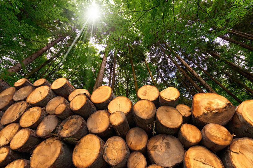 Kosztowne niszczenie lasów. /123RF/PICSEL