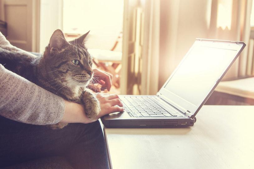 Kot często towarzyszy człowiekowi /©123RF/PICSEL