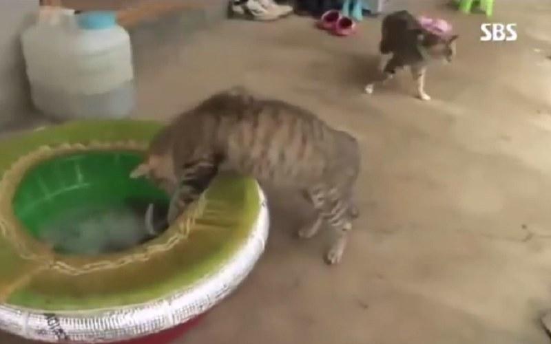 Kot dobiera się do ośmiornicy /YouTube