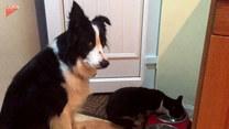 Kot dobrał się do jego miski. Jak zareaguje pies?
