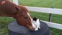 Kot i koń zostali najlepszymi przyjaciółmi. Urocze