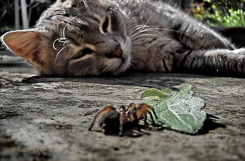 kot i pająk /© Photogenica