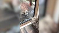 Kot i wiewiórka za pan brat... zza szyby.