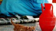 Kot-kleptoman kradł bieliznę