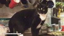 Kot kontra laserowa kropka