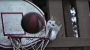 Kot koszykarz- trafia lepiej niż Michael Jordan