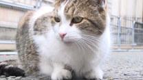 Kot Larry rządzi w rezydencji brytyjskiego premiera