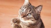 Kot na diecie. Czy nadal będzie cię kochać?